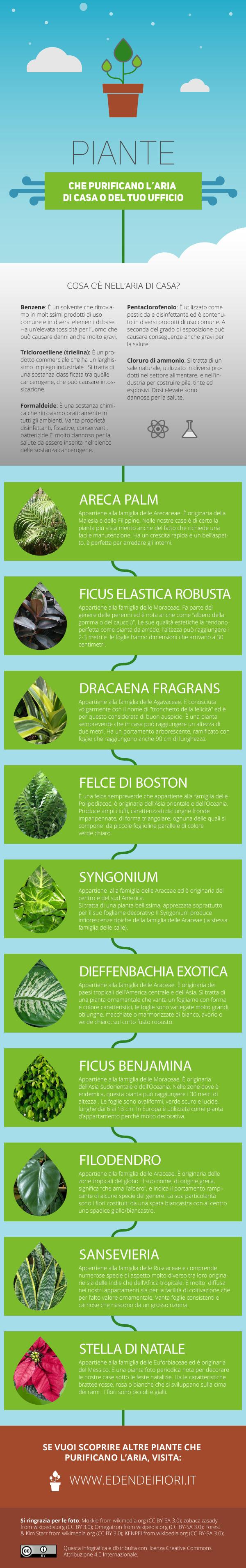 10 piante che purificano l'aria
